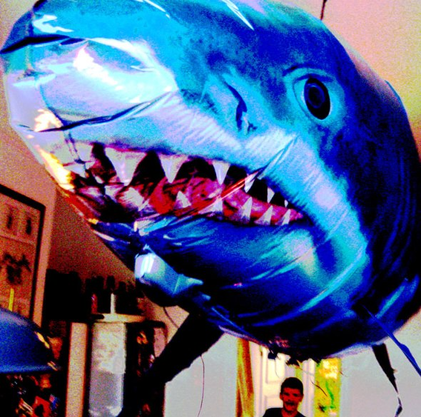 Shark-in-Kitchen