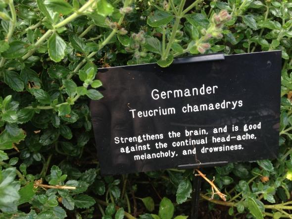 The Bitter Taste of Germander