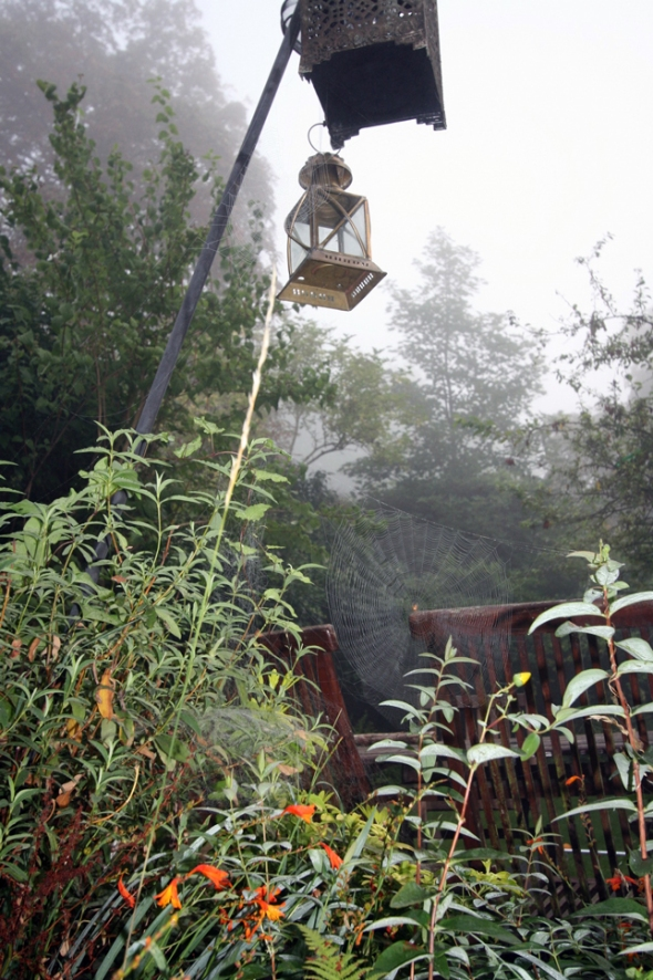 This Mornings Misty Garden